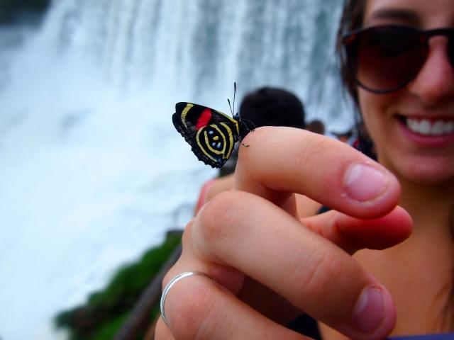 Iguazú Falls mariposa